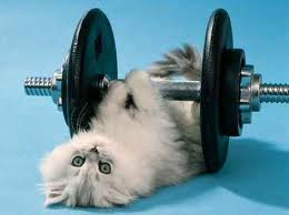 kitty_exercise