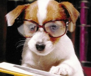 puppy_with_glasses_update