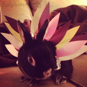 bunny_turkey